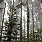 Foggy Forest Morning - Willamette National Forest by AmyBuchmeier
