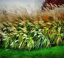 Beautiful Pampas Grass by Linda Miller Gesualdo