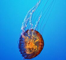 Jellyfish by CreatorsBeauty