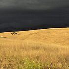 Santa Ynez Valley CA  by Stephen Homer