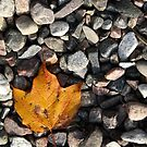R3 - Fall Leaf by vicks94
