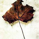 Leaf by SquarePeg
