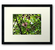 The Female of the Species Framed Print