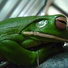 arn't i cute - white lip green tree frog  by myhobby