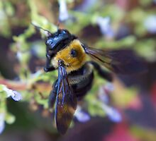 Bee Garden by jrphotography05