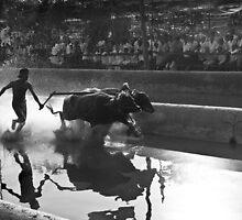 buffalo race-II by Dinni H