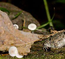 Toadstool Garden by Jordan Selha
