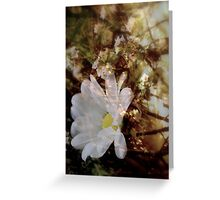 Restful Place Greeting Card