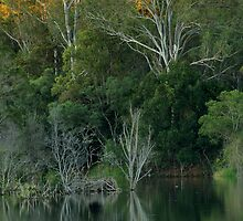 Lake Samsonvale, Queensland. by Ian Hallmond