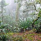 In the Rainforest by Graeme  Hyde