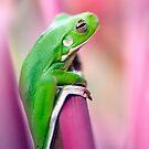 Froggie in the pink by Jenny Dean