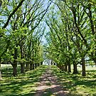 The Long Driveway in Spring by clearviewstock