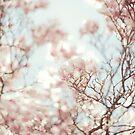 magnolia by Natasha Calhoun