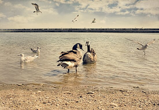 From the Shores of Lake Ontario by KatMagic Photography
