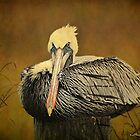 Brown Pelican Relaxing - Textures by Kathy Baccari