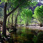 Fish Creek by J. Michael Runyon