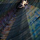 Charlotte & Web In The Evening Light by heatherfriedman
