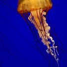 YELLOW JELLYFISH by RoseMarie747