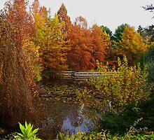VanDusen Gardens, Vancouver BC Canada by AnnDixon
