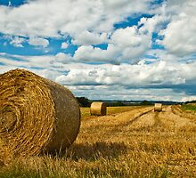 Hay Fields of Heyshott by Alex  Motley