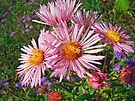 Pink Aster Wildflower by MotherNature