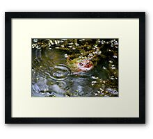 Snapping turtle study 3 Framed Print