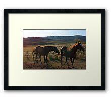 Sunshine Sorrels Framed Print