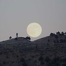 Silhouettes of a Harvest Moon by Betty E Duncan © Blue Mountain Blessings Photography