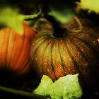 Harvest Time by KatsEyePhoto