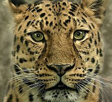Endangered Beauty! by Mark Hughes