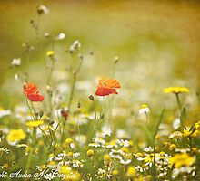 Autumnal Wildflower Field by A McChrystal
