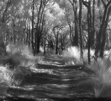 Brisbane Ranges Track by ShaneBooth