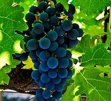 Lifeblood (Cabernet Sauvignon Grapes) by James Watkins