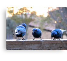 ♪♪ Feed the birds, tuppence a bag ♪♪ Canvas Print