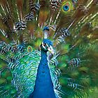 Wild Faces: Peacock by Christopher Ashdown