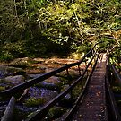 Log Bridge by Country  Pursuits