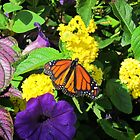 Butterfly on Flowers by Cynthia48