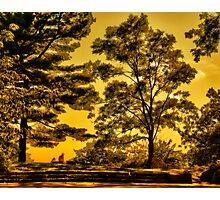 Bussey Hill, Arnold Arboretum Photographic Print
