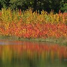 Autumn on the Marsh by lorilee