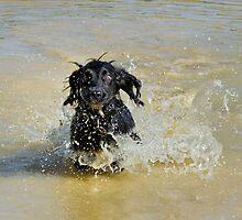 The muddy pond by JEZ22