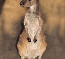 Where's My Momma? Peel Zoo, Pinjarra, Western Australia by Toni Kane