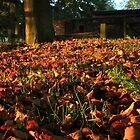 Autumn Harvest by GlennB