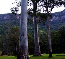 Three Trees Stand Before the Cliffs by Cathie Sherwood