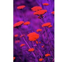Floral Chromatic Overkill Photographic Print