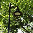 Lamp by amak