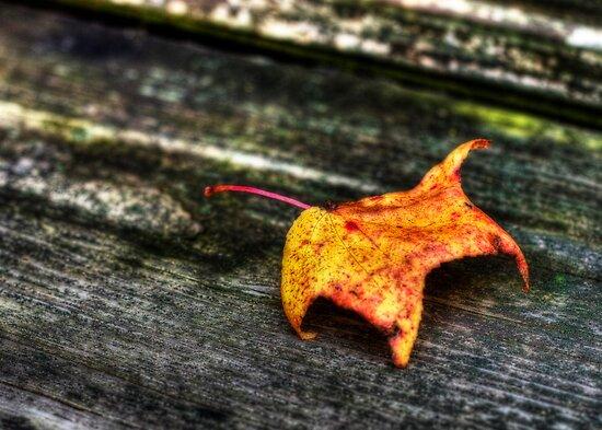 it's fall again... by Yelena Rozov
