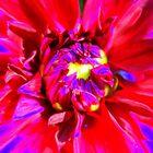 Raving Beauty by Deborah Crew-Johnson