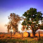 Bundaberg in Living Colour by Luke Griffin