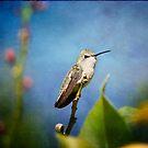 Anna's Hummingbird by Lynn Starner