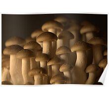 Mushroomscape Poster